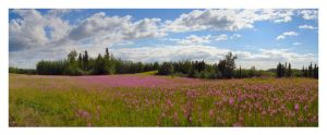 Fireweed Meadow by Djohns