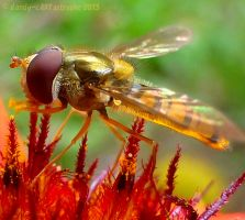 Bugwalk 136 by dandy-cARTastrophe