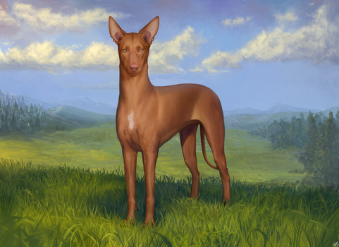 The Pharaoh Hound + 3 other versions linked below! by Alexandoria