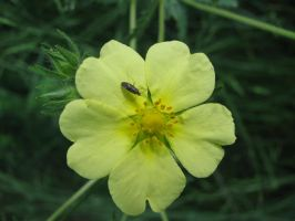 Yellow Hearts and Insect by Contengent-Necessity