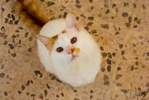 Snowy Cat - Curious Look by Raneem90