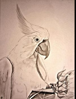 hollygalah's Cocky by KathrynPinkham