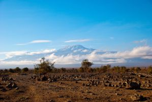 Kilimanjaro in the morning by Callithrix