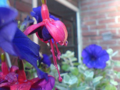 Flower with raindrop by DrownedFeather