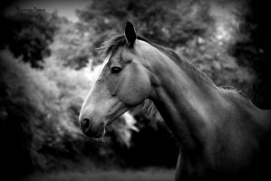 Mare by CantRainAllTheTime-1
