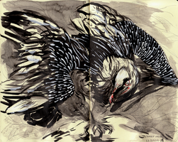 Bearded Vulture by Lynndoodles