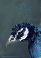 Peacock Head Study by Emberguard