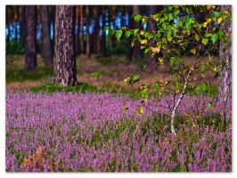 heather land by IzabelaMilczarek