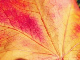 A Leaf #2 closer look by Hiromi415