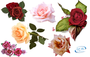 Roses - PNG by lifeblue