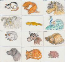 Animals by Baculum