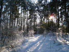 Winter in Eastern Germany 2 by Haufschild