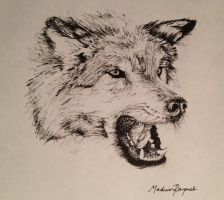 Wolf sketch by Mvraymer12