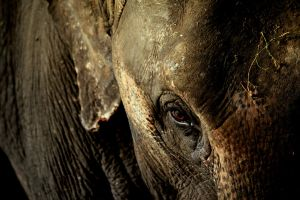 elephant by mightylens