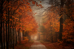 Get Lost In Autumn by Nelleke