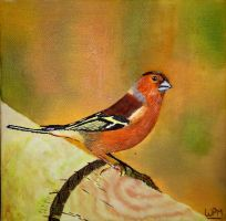 Chaffinch by WendyMitchell