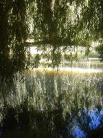 Willow Branches by Midnyt-Moonlight