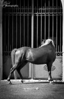 beautiful horse by EffyPhotography