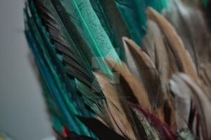 Feathers by Jessica-AuBuchon
