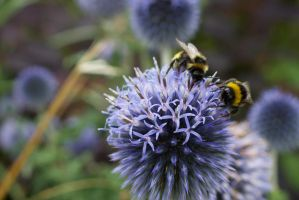 Bumbling by VincentPhotography