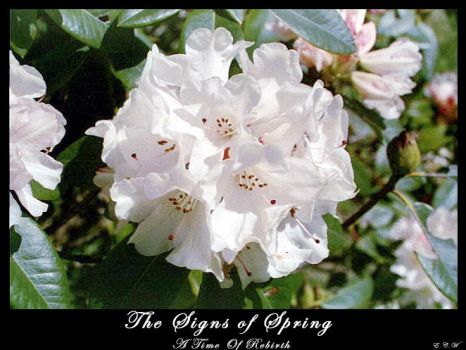 The Signs Of Spring by themetrosexual