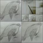 Bird drawing stages by QandeelLight
