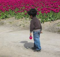Tiptoe Through The Tulips by Photos-By-Michelle