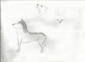 My First time (EVER) to draw a wolf by 12girlwithadream