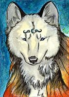 ACEO - Wolftail by Quoosa