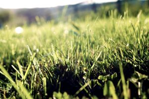 50mm Grass by BOy-Of-WONDEr