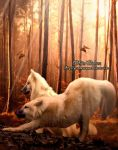 White Wolves by GrandeReveuse