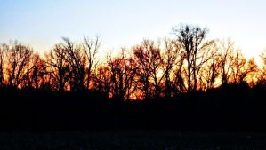 Sunset Treeline by TemariAtaje
