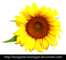 Sunflower by margarita-morrigan