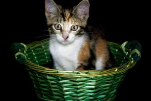 Cat on Basket by JacquiJax