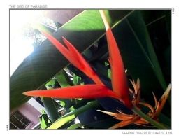 THE BIRD OF PARADISE by SRUJAL