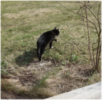 Prowling in the lovely Spring weather 1 by Kattvinge