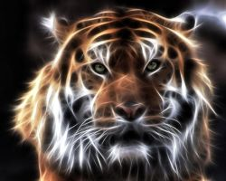 Fractal Tiger by mceric