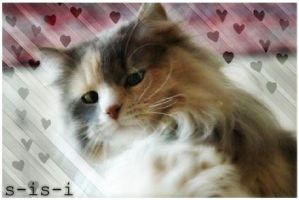 His.Back.My.Sweet.CAT by S-iS-i
