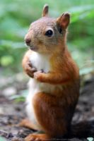 squirrel 2 by red-FeNIks