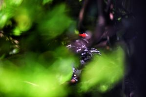 Find the Woodpecker by clippercarrillo