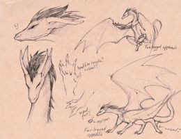 Dfaran Dragon Concepts by Perytiion