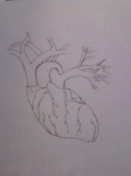 Anatomical Heart by NoCigaro