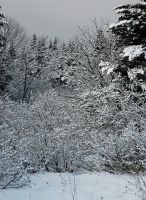 Wintery scene 3 by LucieG-Stock