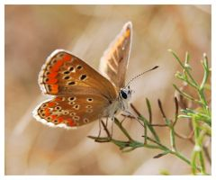 Butterfly macro 7 by selley