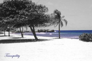 Tranquility by RockinBassist73