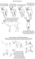 Basic Deer behavior tutorial by creepygoth666