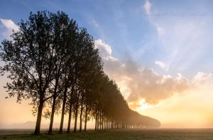 Trees in the mist  V by Betuwefotograaf