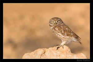 Watching you by RoieG