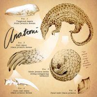 Manis javanica Visual Dictionary page 2 by artemiscrow