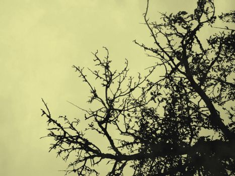 Branches II by Jemany